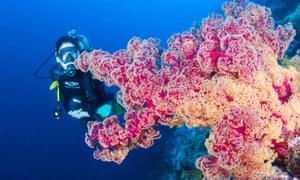 Soft corals in Queensland