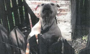 Aaron Joseph's bull terrier