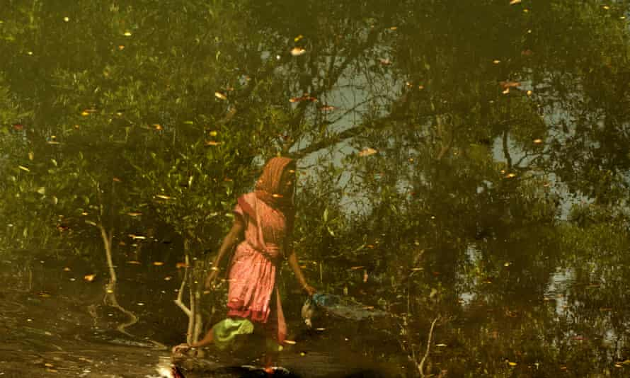 On the brink: life in the mangrove forests of the Sundarbans.