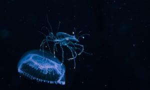 Blackwater: The marine life photography of Kei Nomiyama, Japan - Nov 2015