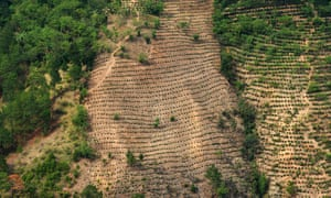 View of crops and a forest on a hillside damaged by deforestation, pests and prolonged droughts in the La Ceiba Talquezal village in the municipality of Jocotan in eastern Guatemala in 2017.