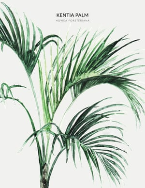 A KENTIA PALM  from the book Urban Botanics by Emma Sibley and illustrated by Maaike Koster.