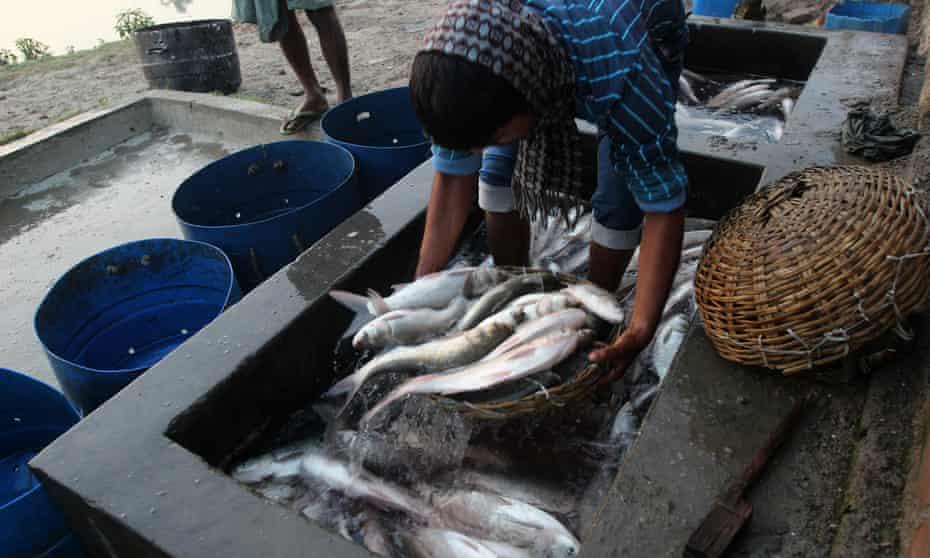 Fishermen measure fish before sale