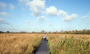 Fecund flatlands … Wicken Fen in Cambridgeshire.