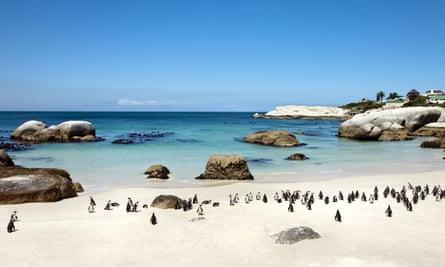 Penguins on Boulders Beach, Cape Town, Cape Peninsula, Western Cape, South Africa