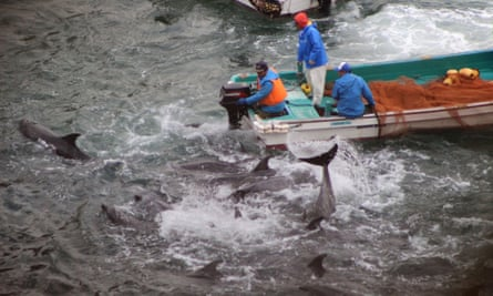 Photo taken in 2014 by environmentalist group Sea Shepherd Conservation Society shows bottlenose dolphins trapped in the cove during the selection process by fishermen in the Japanese town of Taiji.