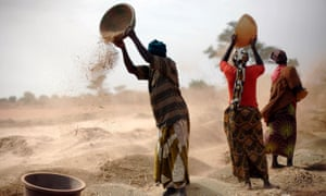 Malian women sift wheat in a field near Segou, central Mali.
