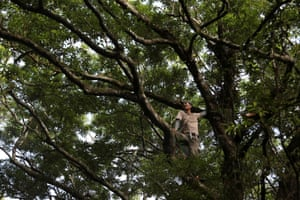 Hung Hsin-chieh, a research assistant, climbs a tree as he looks for endangered plants to collect in Jin Shui forest in Pingtung, Taiwan