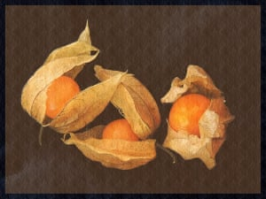 Physalis, Dutch style three ripe physalis against a dark brown textured background