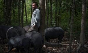 Blackstrap pigs