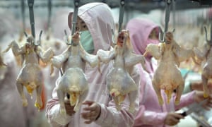 Workers inspect chickens at a poultry factory in China