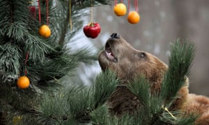 bear christmas tree fruit