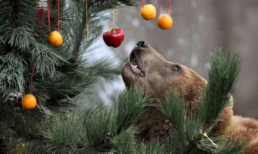bear christmas tree fruit