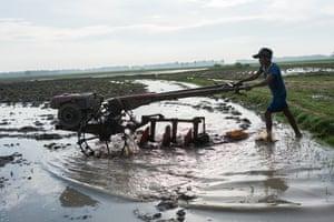 Darany, a farmer, ploughs a rice field