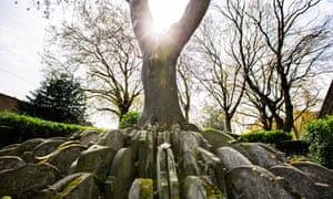 The Hardy Tree at St Pancras church, London. During his architect apprenticeship,  Hardy, instructed the gravestones be repositioned around the tree after a railway line was built over part of the churchyard. Photograph by Graeme Robertson