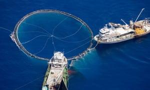 Using purse seine nets to fish for bluefin tuna, Turkey