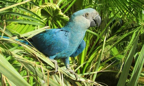 Eight bird species are first confirmed avian extinctions this decade