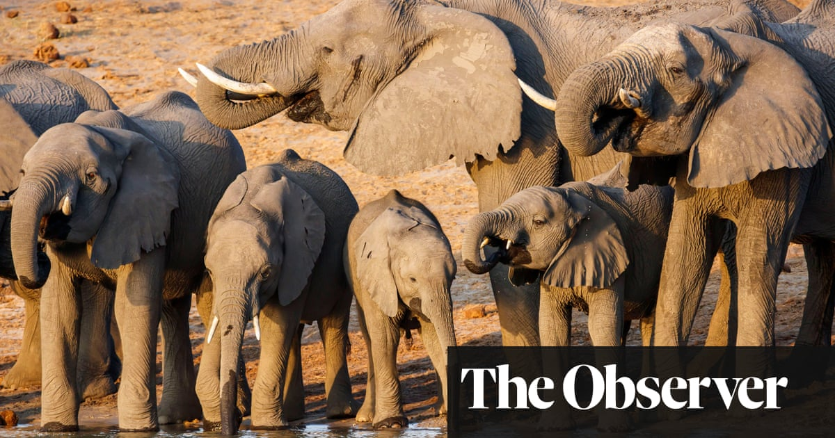 New oilfield in African wilderness threatens lives of 130,000 elephants