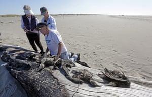 A citizen patrol surveys dead birds that wash ashore on beaches along the US West Coast, Ocean Shores, Washington