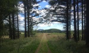 Kilmux woods, near Leven.