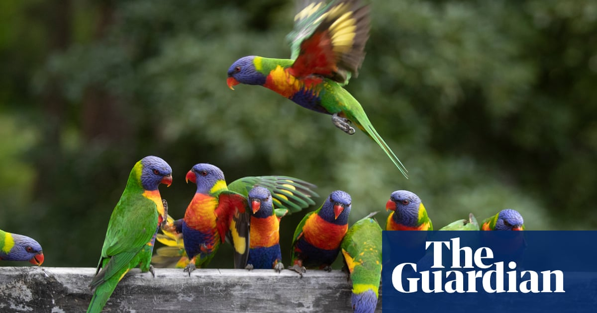 Australian bird of the year 2021: nominate your favourite for the shortlist