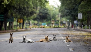 Dogs rest on the deserted Man Singh road during lockdown in New Delhi, India, on 19 April.