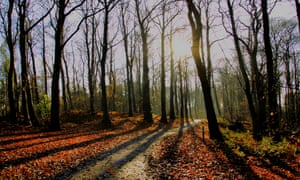 Delamere Forest, Cheshire, on an autumn day with sunlight through the leafless trees.