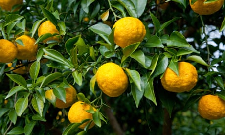 Zest for life: citrus plants to grow at home