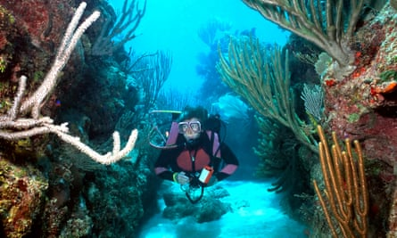 Woman Scuba diver in Roatan glides along through one of the groove systems of coral in Roatan, Bay Islands, Honduras