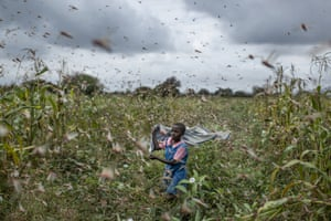 A farmer's daughter tries to chase away swarms of desert locusts in Katitika village, Kenya