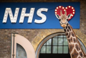 Maggie the giraffe stands next to a sign showing support for the NHS at ZSL London Zoo