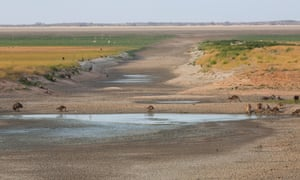 Kangaroos compete for the small amount of water which remains in the outfall at Lake Cawndilla near Menindee NSW. Thursday 17th January 2019.