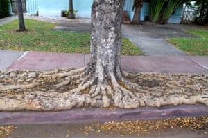 Beach tree in Miami, Florida