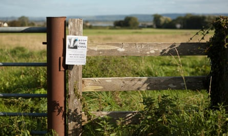 An anti-badger cull flyer near Blakeney, Gloucestershire