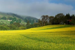 Swaledale's wildflower meadows in North Yorkshire