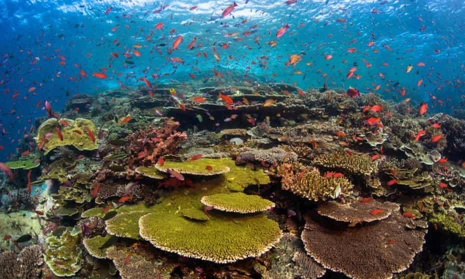 A coral reef at the Batu Bolong dive site in Komodo national park, Indonesia