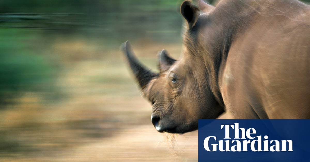 What drives the demand for rhino horns? | Nicky Reeves