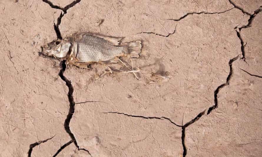 A dead fish lies on cracked earth in La Sorrueda reservoir in Gran Canaria, Spain.