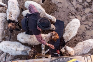 Awdeh's mother gives her sheep a drink, using water from a tanker