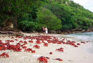 One of the 10 greatest natural wonders on Earth: red crabs moving from the forest to the ocean on Christmas Island.