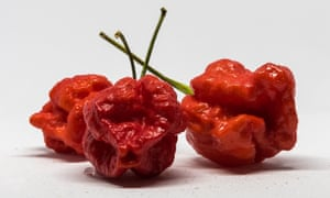 One Carolina Reaper was measured at 2,200,000 Scoville units – about the same as pepper spray.