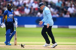 Jason Roy attempts to move the pigeon into a better fielding position.