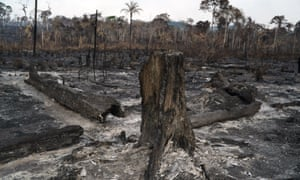 Trees destroyed after a fire in the Alvorada da Amazonia region in Novo Progresso, Para state, Brazil.
