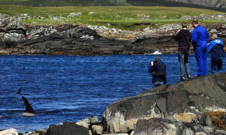 People watching whales from the coast of Scotland.