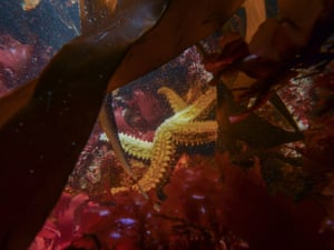 12-18 years category winner: Spiny Starfish, Falmouth, Cornwall by Jacob Guy (age 18) from Torquay, Devon