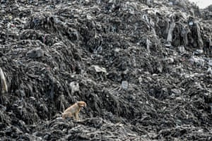 A dog enjoys the view at Kibarani dump site in Mombasa, Kenya. A year after Kenya announced the world's toughest ban on plastic bags, and eight months after it was introduced, the authorities are claiming victory.