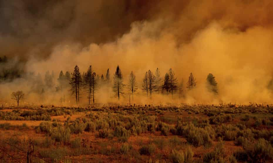 Smoke envelops trees as the Sugar fire, part of the Beckwourth Complex fire, burns near Doyle, California.
