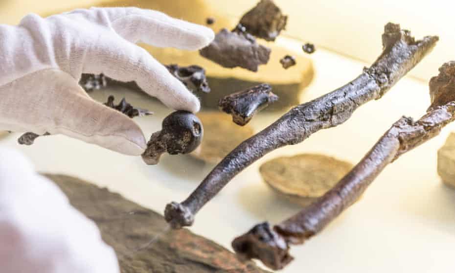 Male Danuvius guggenmosi bones