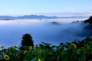 Sunflowers in the foreground as the mountains are enveloped by a sea of mist after rain at Shitan scenic area, Mount Huangshan, China