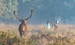 A misty morning in Richmond Park, Surrey